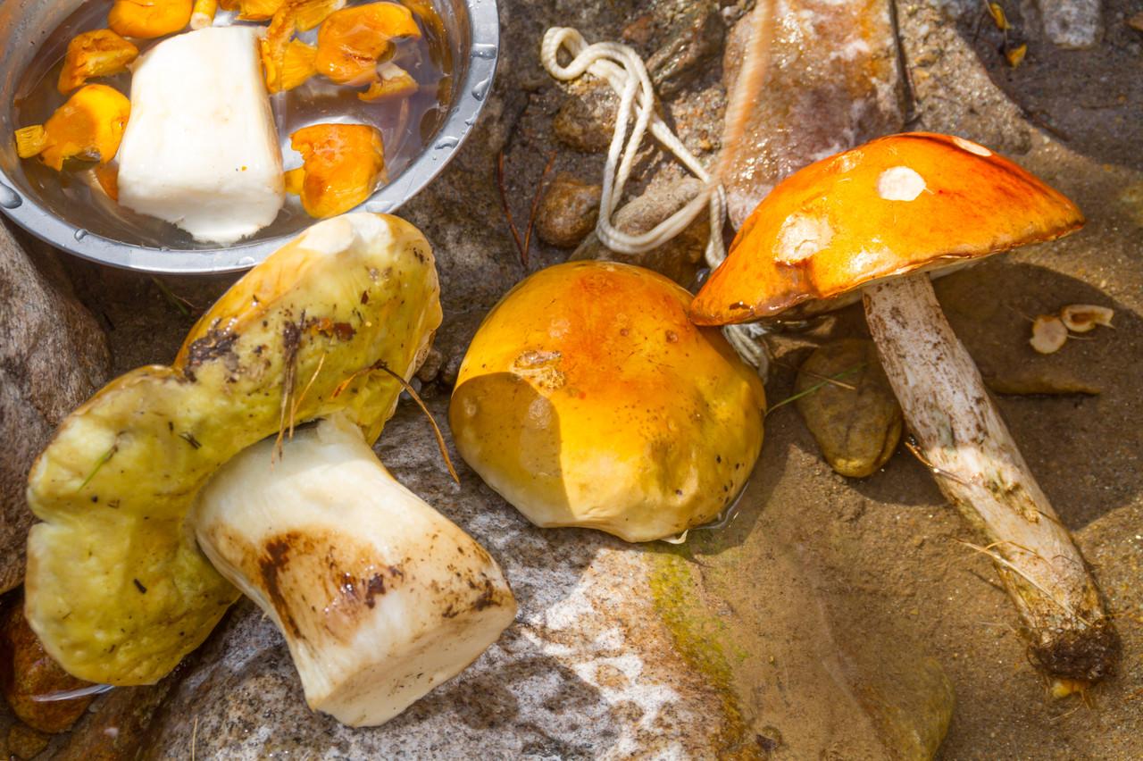 Белые, лисички и ещё один гриб, забыл как звать